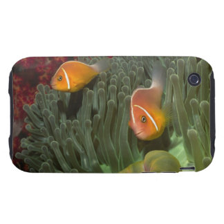 Pink Anemonefish in Magnificant Sea Anemone Tough iPhone 3 Cover