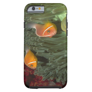 Pink Anemonefish in Magnificant Sea Anemone Tough iPhone 6 Case