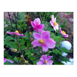 Pink Anemones Postcard