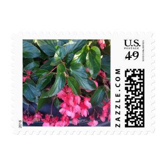 Pink Angel Wing Begonia Flowers Postage Stamp