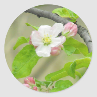 Pink Apple Blossom Classic Round Sticker