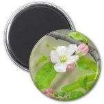 Pink Apple Blossom Fridge Magnet
