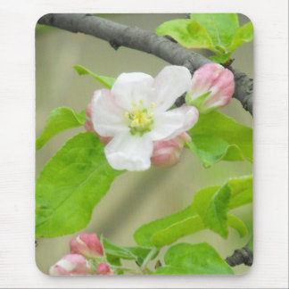 Pink Apple Blossom Mouse Pad