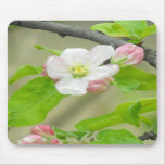 Pink Apple Blossom Mouse Pads