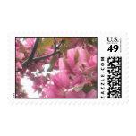 Pink Apple Blossom Postage