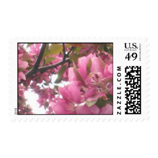 Pink Apple Blossom Postage