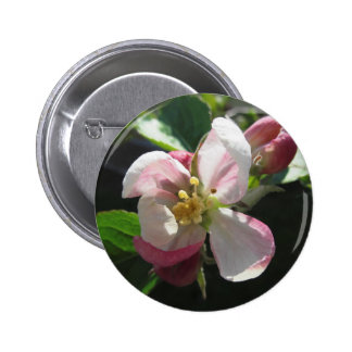 Pink apple blossoms 2 inch round button