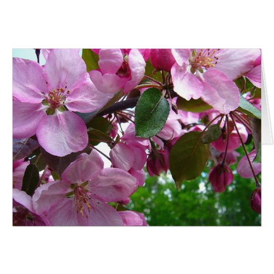 Pink Apple Blossoms Card