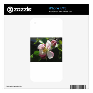 Pink apple blossoms decal for iPhone 4