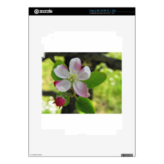 Pink apple blossoms decal for the iPad 2