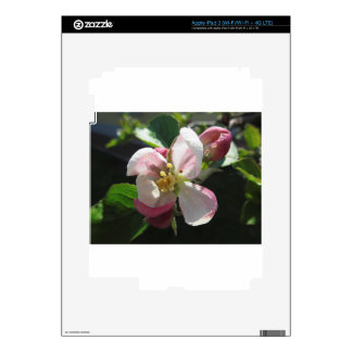 Pink apple blossoms iPad 3 decal
