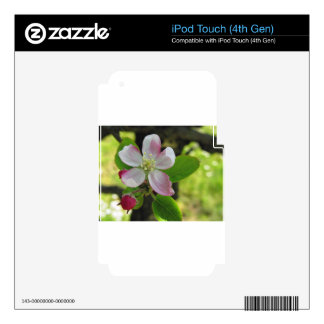 Pink apple blossoms iPod touch 4G decals