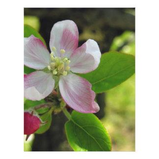Pink apple blossoms letterhead