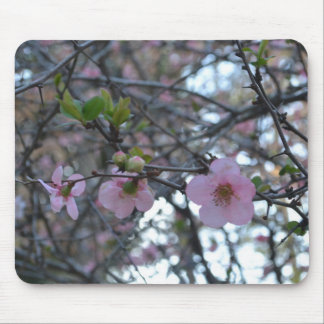 Pink Apple Blossoms Mouse Pad