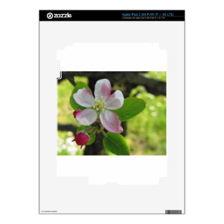 Pink apple blossoms skins for iPad 3