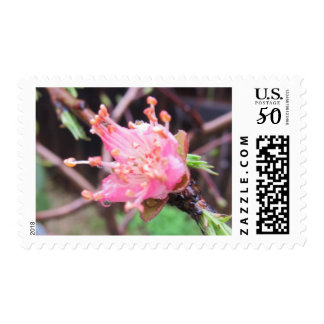 Pink Apricot Flower Postage