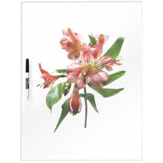 Pink Asiatic Lilies Closeup Dry Erase Board