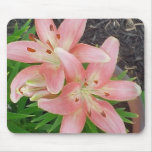 Pink Asiatic Lilies Mouse Pad
