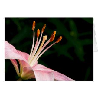 Pink Asiatic Lily Closeup Card