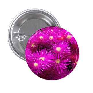 Pink Aster Flowers Pinback Buttons