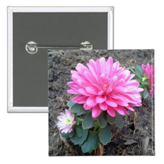 Pink Aster Flowers Button