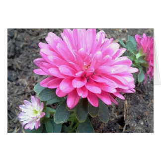 Pink Aster Flowers Card