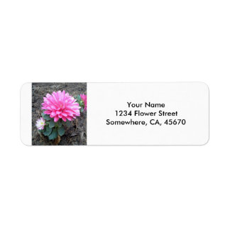 Pink Aster Flowers Label