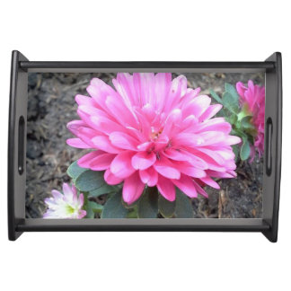 Pink Aster Flowers Serving Tray