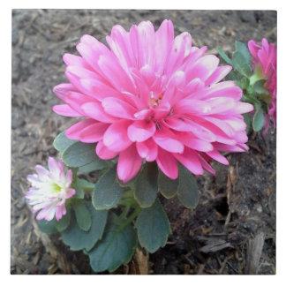 Pink Aster Flowers Tile