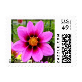 Pink Asteraceae Beauty S Postage