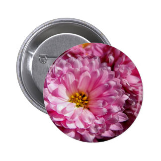 Pink Asters Pins