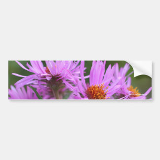 Pink Asters Flower Photo Bumper Sticker