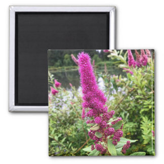 Pink Astilbe Flowers by a Pond Magnet