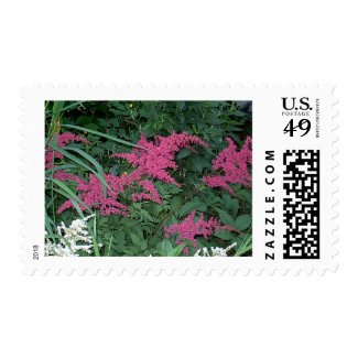 Pink Astilbe in Old Orchard Beach, Maine Postage