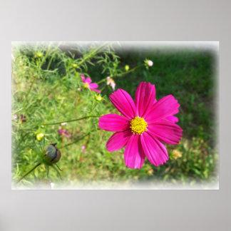 Pink autumn morning poster