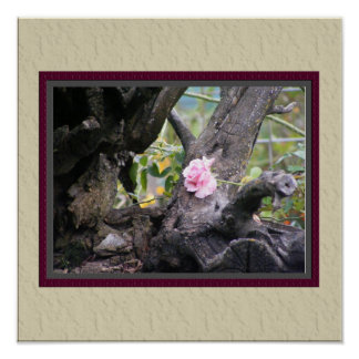 Pink Autumn Rose Poster with Faux Matting