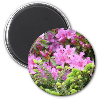 PINK AZALEA 30 FLOWERS Pine Cards Gifts Mugs Magnet