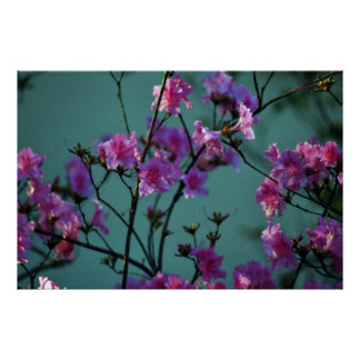 Pink Azalea and meaning Poster
