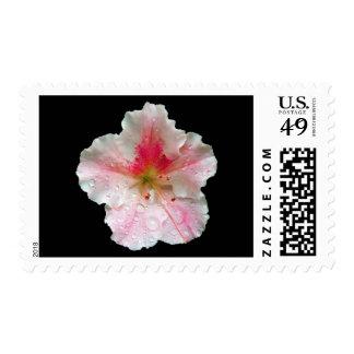 'Pink Azalea Bloom' Postage Stamps