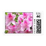 Pink Azalea Blooms Postage
