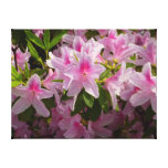 Pink Azalea Bush Spring Flowers Canvas Print