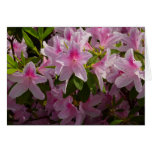 Pink Azalea Bush Spring Flowers Card