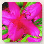Pink Azalea Coaster