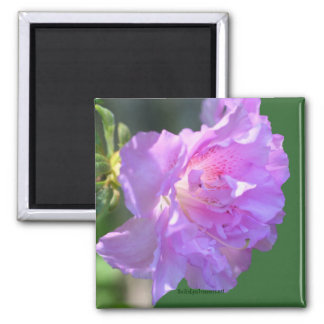 Pink Azalea Flower Photo Magnet