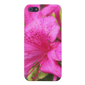 pink azalea flowers,  杜 鹃 花 cover for iPhone SE/5/5s