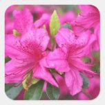 pink azalea flowers,  杜 鹃 花 sticker