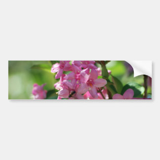 Pink azalea flowers and meaning bumper sticker