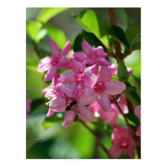 Pink azalea flowers and meaning postcard