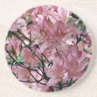 Pink Azalea flowers Drink Coaster