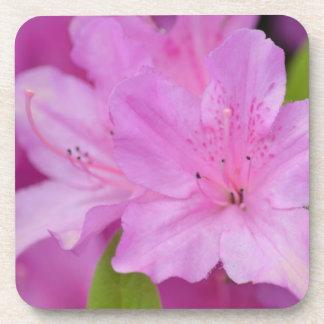 Pink Azalea Flowers Coaster